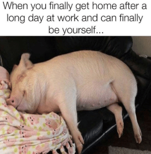 Work, Home, and Can: When you finally get home after a  long day at work and can finally  be yourself...