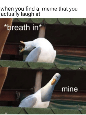 Meme, Memes, and Imgur: when you find a meme that you  actually laugh at  breath in*  mine 3 Memes for Imgur.