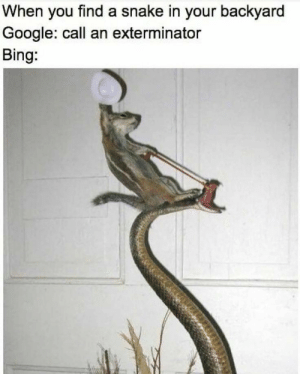 U have yeed ur last haw serpent: When you find a snake in your backyard  Google: call an exterminator  Bing: U have yeed ur last haw serpent