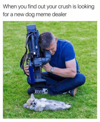 Crush, Cute, and Meme: When you find out your crush is looking  for a new dog meme dealer Come ooooooon, be cute or something | 👉 @betasalmon for more deals