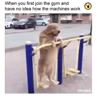 Repost @omgawkdotcom ・・・ When you first join the gym and don't know how the machines work! newbie noob gym gymmemes gymlife: When you first join the gym and  have no idea how the machines work  OMGawk Repost @omgawkdotcom ・・・ When you first join the gym and don't know how the machines work! newbie noob gym gymmemes gymlife