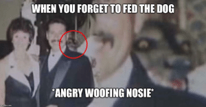 Crazy Dog: WHEN YOU FORGET TO FED THE DOG  ANGRY WOOFING NOSIE Crazy Dog
