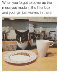 Memes, 🤖, and Litter Box: When you forgot to cover up the  mess you made in the litter box  and your girl just walked in there  @friend of bae