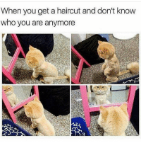 New haircut who dis? @hilarious.ted: When you get a haircut and don't know  who you are anymore New haircut who dis? @hilarious.ted