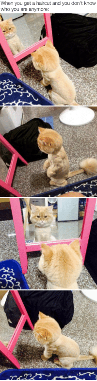 """<p><a href=""""http://itsbabyanimals.tumblr.com/"""" target=""""_blank"""">baby animals <b>here</b></a></p>: When you get a haircut and you don't know  who you are anymore: <p><a href=""""http://itsbabyanimals.tumblr.com/"""" target=""""_blank"""">baby animals <b>here</b></a></p>"""