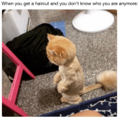 """<p><a href=""""http://babyanimalgifs.tumblr.com/"""" target=""""_blank"""">more baby <b>animals <i>here</i></b></a></p>: When you get a haircut and you don't know who you are anymore: <p><a href=""""http://babyanimalgifs.tumblr.com/"""" target=""""_blank"""">more baby <b>animals <i>here</i></b></a></p>"""