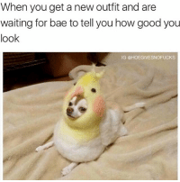 Bae, Duck, and Good: When you get a new outfit and are  waiting for bae to tell you how good you  look  IG @HOEGIVESNOFUCKS Does this duck make me look fat??