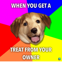 Doge, You, and Get: WHEN YOU GET A  TREAT FROM YOUR  OWNER Doge