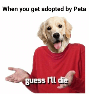 Funny, Memes, and Reddit: When you get adopted by Peta  guess Ill d hilarious peta memes funny reddit peta tweets