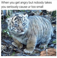 Funny, Lol, and Angry: When you get angry but nobody takes  you seriously cause ur too small Tag a small lol