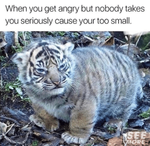 True, Angry, and You: When you get angry but nobody takes  you seriously cause your too small. This is so true
