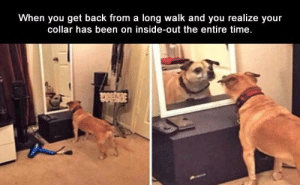 Funny Memes Of The Day 29 Pics: When you get back from a long walk and you realize your  collar has been on inside-out the entire time. Funny Memes Of The Day 29 Pics