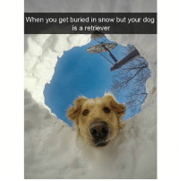 Hello there hooman (@hilarious.ted): When you get buried in snow but your dog  is a retriever Hello there hooman (@hilarious.ted)