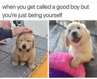 "Good, Http, and Boy: when you get called a good boy but  you're just being yourself <p>Being yourself is good via /r/wholesomememes <a href=""http://ift.tt/2xAekFS"">http://ift.tt/2xAekFS</a></p>"