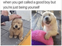 "Good, Http, and Boy: when you get called a good boy but  you're just being yourself <p>The good boy we all deserve via /r/wholesomememes <a href=""http://ift.tt/2wrWrvc"">http://ift.tt/2wrWrvc</a></p>"
