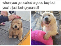 "Good, Boy, and Via: when you get called a good boy but  you're just being yourself <p>Good boy is good via /r/wholesomememes <a href=""https://ift.tt/2LLdJb5"">https://ift.tt/2LLdJb5</a></p>"