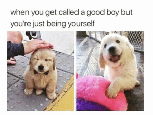 Memes, Good, and Boy: when you get called a good boy but  you're just being yourself https://t.co/uu3w56ZWt8