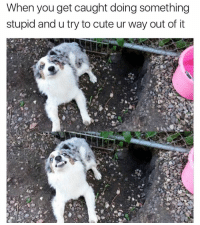 Definitely worth a shot doggo (Also, my twitter has about 2000% more content on it. Twitter- GeorgeResch): When you get caught doing something  stupid and u try to cute ur way out of it Definitely worth a shot doggo (Also, my twitter has about 2000% more content on it. Twitter- GeorgeResch)