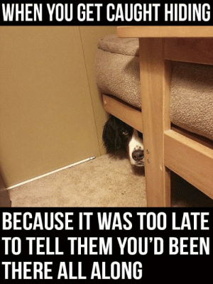 Funny, Lol, and Been: WHEN YOU GET CAUGHT HIDING  BECAUSE IT WAS TOO LATE  TO TELL THEM YOU'D BEEN  THERE ALL ALONG Lol