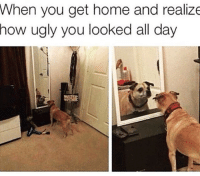 """Memes, 🤖, and Spam: When you get home and realize  how ugly you looked all day """"All around me are familiar faces, worn out faces, tired faces"""" thx @katelyn_cornish11 for like spamming -Tag peeps! -Follow! -Like some posts! dogs dog doggo dogstagram doglover dogsofinsta doglove doglovers dogsofinstaworld puppy puppylove puppylife puppies dankmemes dankmeme dank memes meme sausage weinerdog fat me lol lmao 😂"""