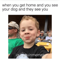 Memes, Home, and 🤖: when you get home and you see  your dog and they see you  avinmeme ME ME ME ME