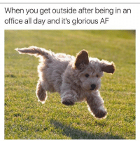 Af, Memes, and Office: When you get outside after being in an  office all day and it's glorious AF
