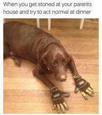 When you get stoned at your parents  house and try to act normal at dinner  @mo wad what the heck is this doggo doing lol