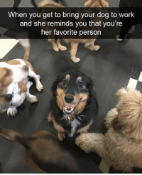 Memes, Work, and 🤖: When you get to bring your dog to work  and she reminds you that you're  her favorite person https://t.co/SOo8T98hUz