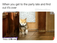 Lmao, Memes, and Party: When you get to the party late and find  out it's over  @DrSmashlove  17代目  豆助(0歳) LOOK HOW HE WALKS LMAO AWWW 😍😂❤️