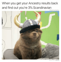 I'M A VIKING FEED ME (Click the link in my bio to vote for me to win the @shortyawards in the Best Meme-Parody category! Voting is almost over) (Also, this stunning dog is @bertiebertthepom): When you get your Ancestry results back  and find out you're 3% Scandinavian  @tank.sinatra  MADE WITH MOMUS I'M A VIKING FEED ME (Click the link in my bio to vote for me to win the @shortyawards in the Best Meme-Parody category! Voting is almost over) (Also, this stunning dog is @bertiebertthepom)