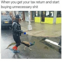 Memes, Peacock, and Tax Return: When you get your tax return and start  buying unnecessary shit Stuntin' On Em' With A Peacock 😂😂😂😂😂 pettypost pettyastheycome straightclownin hegotjokes jokesfordays itsjustjokespeople itsfunnytome funnyisfunny randomhumor