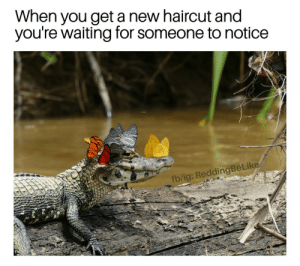 Little ol me? by IFuckingMissPeyton FOLLOW 4 MORE MEMES.: When you geta new haircut and  you're waiting for someone to notice  fb/ig: ReddingBeLike Little ol me? by IFuckingMissPeyton FOLLOW 4 MORE MEMES.
