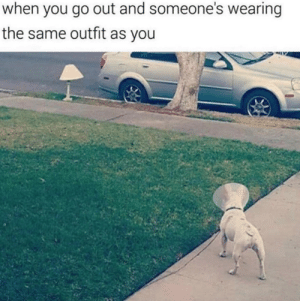 Memes, Good, and Doggo: when you go out and someone's wearing  the same outfit as you Bring On The Good Times With These 33 Heckin' Good Doggo Memes! - I Can Has Cheezburger?