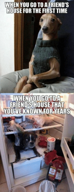 Memes Hilarious Can't Stop Laughing: WHEN YOU GO TO A FRIEND'S  HOUSE FOR THE FIRST TIME  WHEN YOU GOTOA  FRIEND'S HOUSE THAT  YOUVE KNOWN FOR YEARS Memes Hilarious Can't Stop Laughing