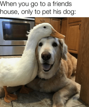 I love his doggo: When you go to a friends  house, only to pet his dog: I love his doggo