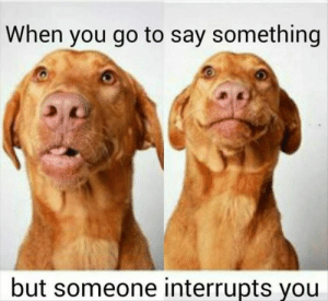 Animals, Dogs, and Memes: When you go to say something  but someone interrupts you Dog Memes Of The Day 32 Pics – Ep43 #dogs #dogmemes #lovelyanimalsworld - Lovely Animals World