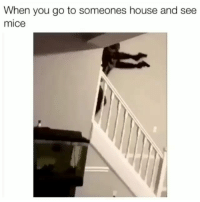 Funny, Lol, and House: When you go to someones house and see  mice Still stuck on them perfect flips lol.. funniest15 viralcypher funniest15seconds Www.viralcypher.com