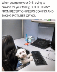 Family, Memes, and Work: When you go to your 9-5, trying to  provide for your family, BUT BETHANY  FROM RECEPTION KEEPS COMING AND  TAKING PICTURES OF YOU  @BetaSalmon BETHANY I DON'T CARE ABOUT YOUR COLLAGE, I'M TRYING TO WORK | 👉 @betasalmon for more