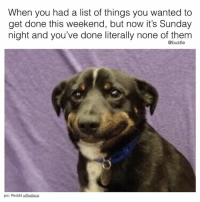 oh lol woops this is me 🙃: When you had a list of things you wanted to  get done this weekend, but now it's Sunday  night and you've done literally none of them  @bustle  pic: Reddit ulflodisco oh lol woops this is me 🙃