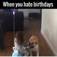 'Grow up' - Dog, almost definitely 😂😂🐶: When you hate birthdays 'Grow up' - Dog, almost definitely 😂😂🐶