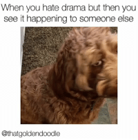 """""""Ooh that's juicy"""" literallythatsyou Vid-caption via @thatgoldendoodle: When you hate drama but then you  see it happening to someone else  @thatgoldendoodle """"Ooh that's juicy"""" literallythatsyou Vid-caption via @thatgoldendoodle"""