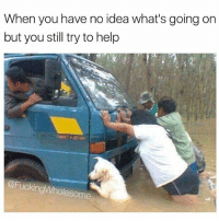 Dank Memes, Idea, and Ideas: When you have no idea what's going on  but you still try to help  FuckingWholesome Good boy @fuckingwholesome