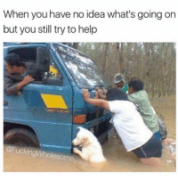 Memes, Good, and Help: When you have no idea what's going on  but you still try to help  @FuckingWholesome He's the one, he's the good boy.