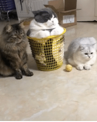 9gag, Friends, and Memes: When you have to hang out with your friends but you don't wanna leave your comfort zone - Follow @meowed cat basket hangout 9gag