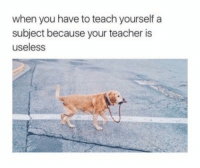 Teacher, You, and When You: when you have to teach yourselfa  subject because your teacher is  useless