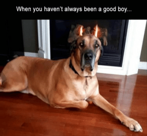 Morning Funny Meme Dump 39 Pics: When you haven't always been a good boy. Morning Funny Meme Dump 39 Pics