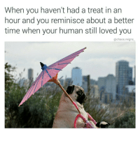 Memes, 🤖, and Reign: When you haven't had a treat in an  hour and you reminisce about a better  time when your human still loved you  @chaos reigns the good ol days follow @chaos.reigns_ 👈