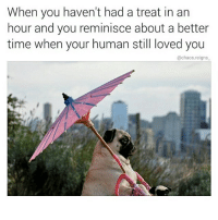 Love, Memes, and Heart: When you haven't had a treat in an  hour and you reminisce about a better  time when your human still loved you  @chaos reigns its raining in my heart (rp @chaos.reigns_ is my all time favourite page follow follow follow ! @chaos.reigns_ )