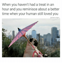 Memes, Good, and Time: When you haven't had a treat in an  hour and you reminisce about a better  time when your human still loved you  @chaos.reigns those were the good ol days...not like now (follow @chaos.reigns_ for more)