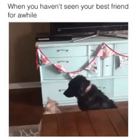 Best Friend, Best, and Girl Memes: When you haven't seen your best friend  for awhile Ok fiiiiiine I missed you @mybestiesays